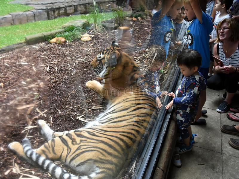 Jonge geitjes die en op foto van een Sumatran-tijger letten nemen royalty-vrije stock afbeelding