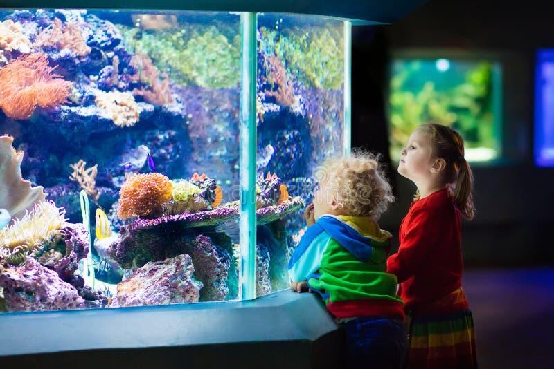 Jonge geitjes die op vissen in tropisch aquarium letten stock afbeeldingen