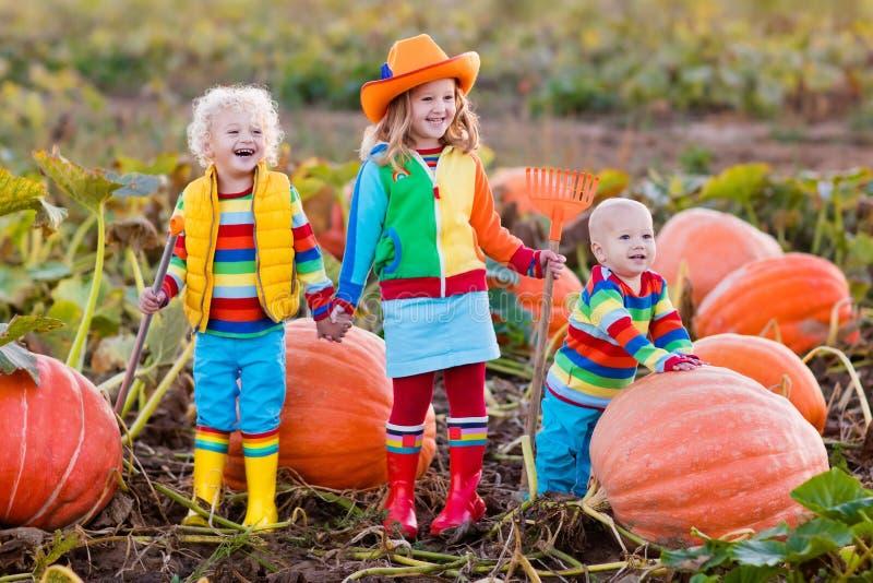 Jonge geitjes die pompoenen op Halloween-pompoenflard plukken royalty-vrije stock foto's