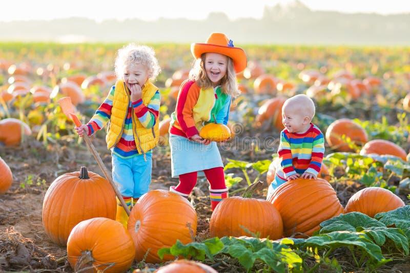 Jonge geitjes die pompoenen op Halloween-pompoenflard plukken royalty-vrije stock fotografie