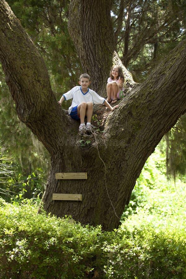 Jonge geitjes die in reusachtige boom beklimmen royalty-vrije stock foto's