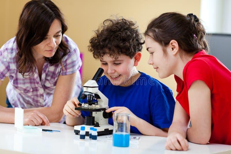 Jonge geitjes gebruikend microscoop