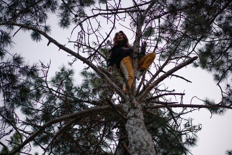 Jonge gelukkige onverschrokken vrouw die op een grote pijnboomboom beklimmen in de bosboom die, emoties, gelukkig positief concep stock afbeelding