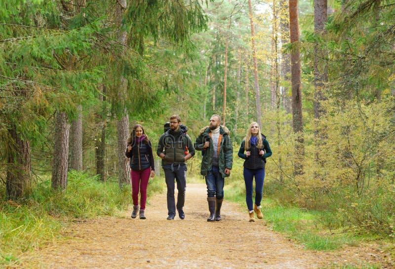 Jonge gelukkige vrienden die in bos lopen en van de goede herfst genieten stock afbeelding