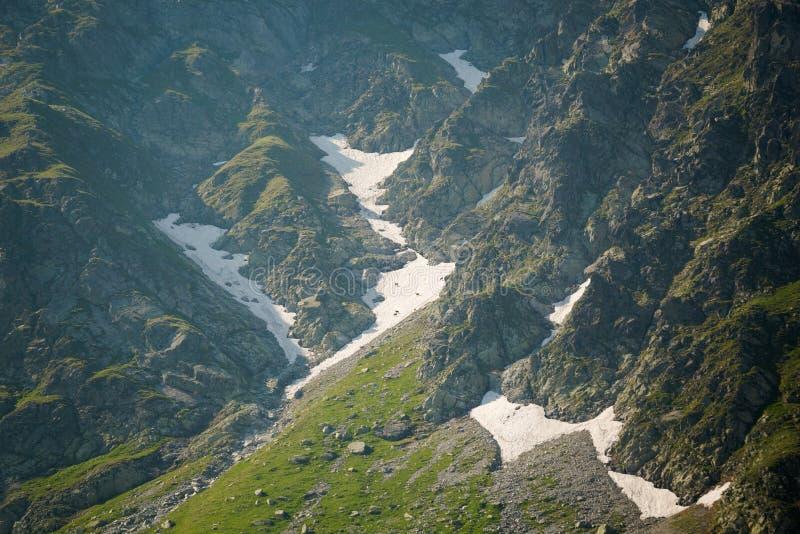 Jonge gemzen Vijf Merenvallei stock afbeeldingen