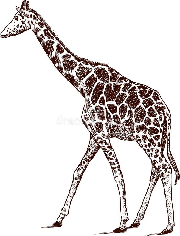 Jonge Giraf Royalty-vrije Stock Fotografie