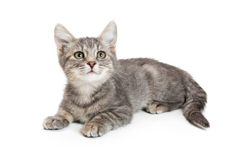 Jonge Grey Tabby Kitten Lying op Wit royalty-vrije stock fotografie