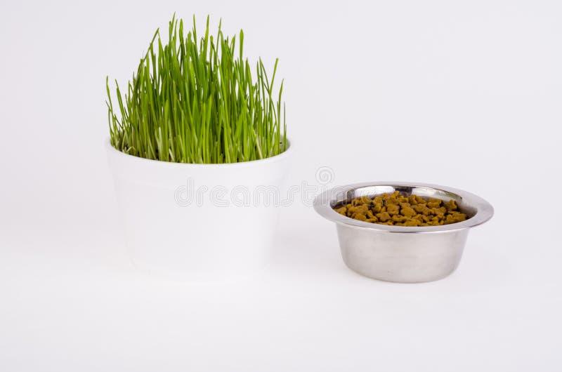 Jonge groene grasspruiten voor huisdier het voeden stock afbeeldingen