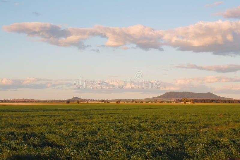 Jonge groene tarwe op de vruchtbare vlaktes van Bellata, NSW, Australië stock foto