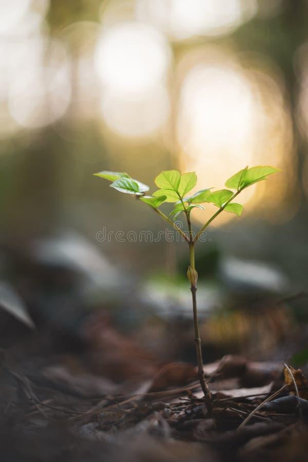 Jonge groene vegetatie in de lente stock afbeelding