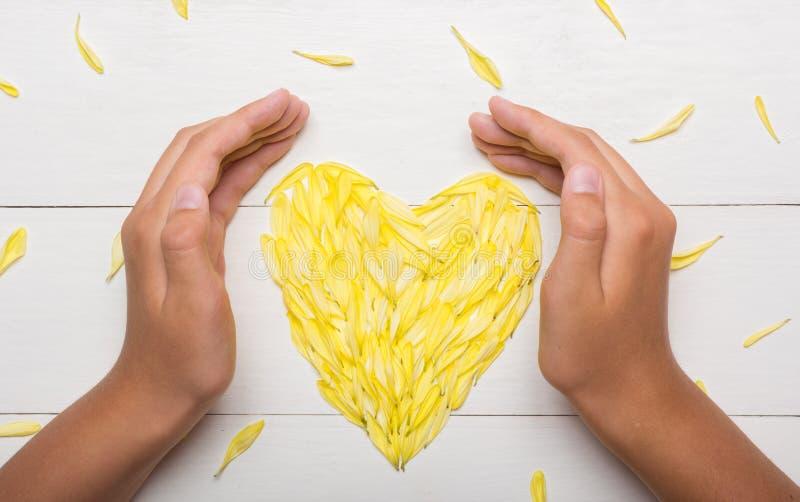 Jonge handen die hart houden die van chrysantenbloemblaadjes wordt gemaakt op lijst royalty-vrije stock foto's