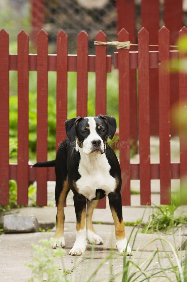 Jonge hond royalty-vrije stock foto