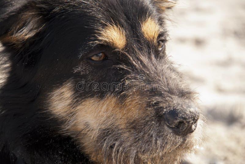 Jonge Hond stock afbeeldingen
