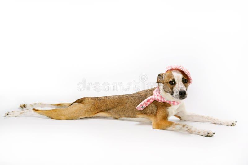 Jonge hond die op vloer ligt stock afbeelding