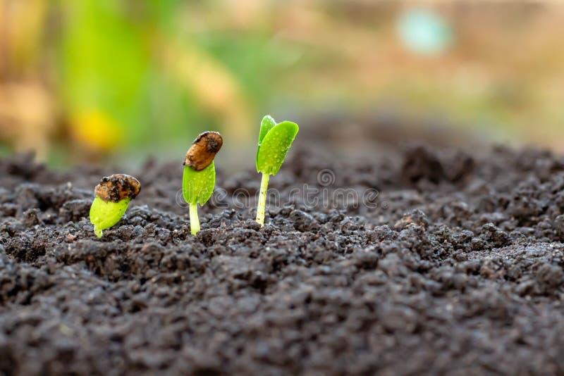 Jonge installatie ter beschikking De zaailing groeit in de grond met zonlicht /Wherever de boom wordt geplant royalty-vrije stock foto's
