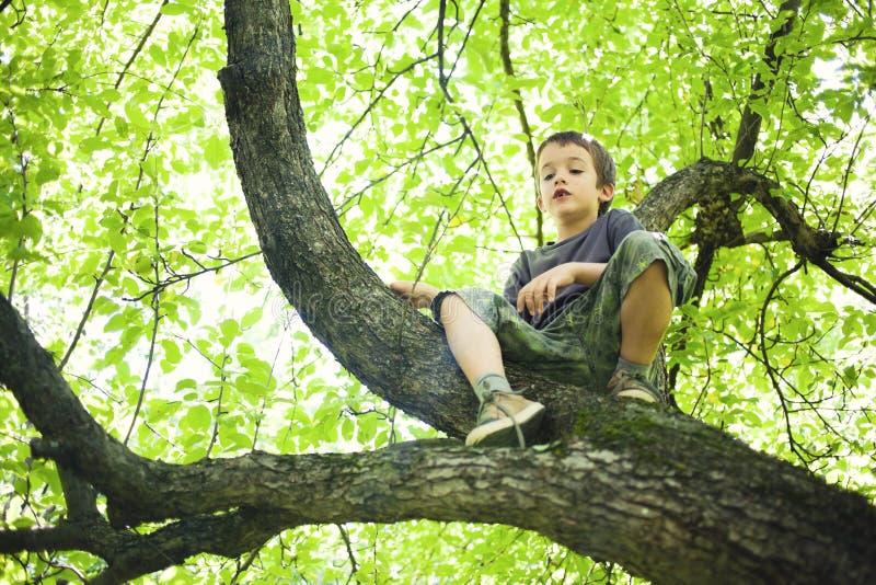 Jonge jongen in boom royalty-vrije stock afbeeldingen