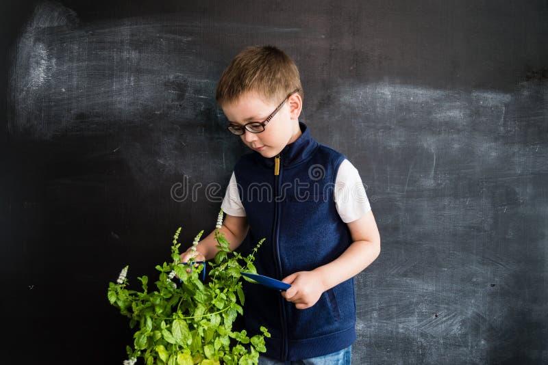 Jonge jongen ` die s zich dichtbij installatie in pot bevinden Jonge tuinman Creatief ontwerpconcept voor de kalender van 2019 stock afbeeldingen
