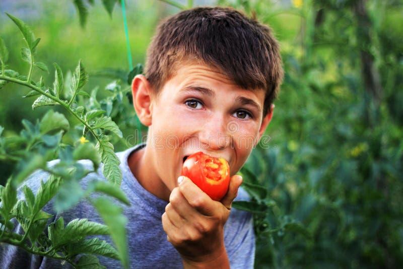 Jonge jongen die verse tomaat eten royalty-vrije stock fotografie