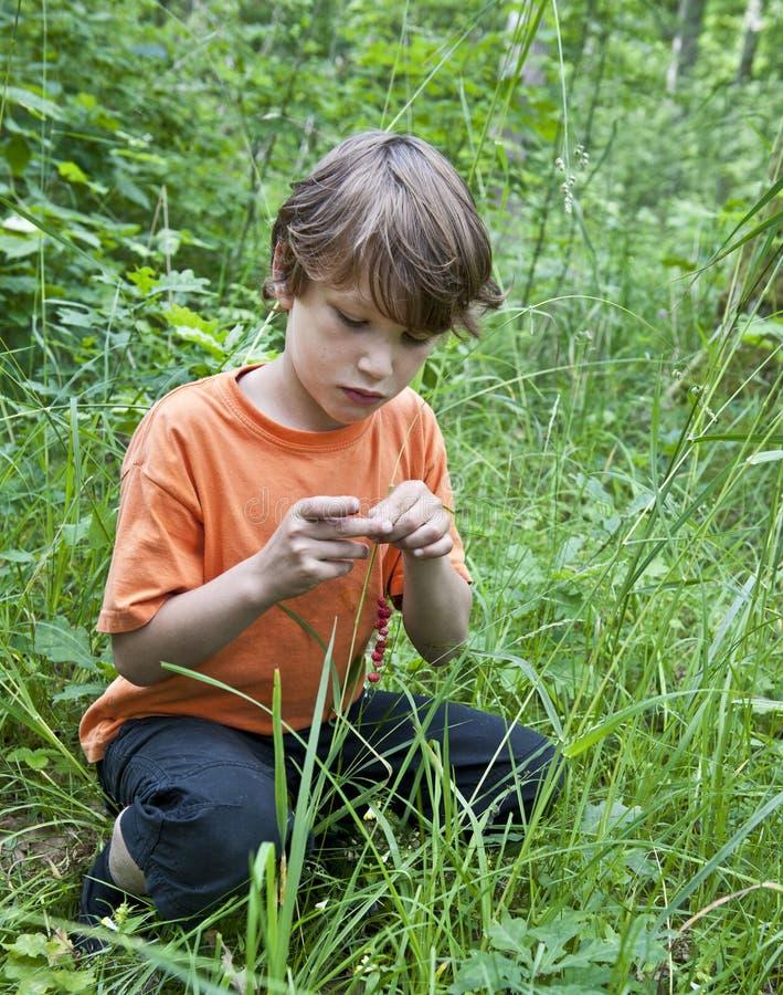 Jonge jongen die wilde aardbeien verzamelt stock fotografie
