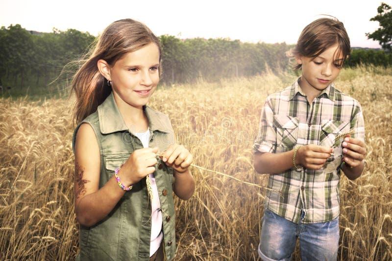 Jonge jongens die pret op het tarwegebied hebben royalty-vrije stock foto's