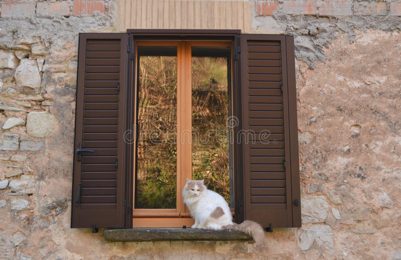 Jonge kat stock fotografie