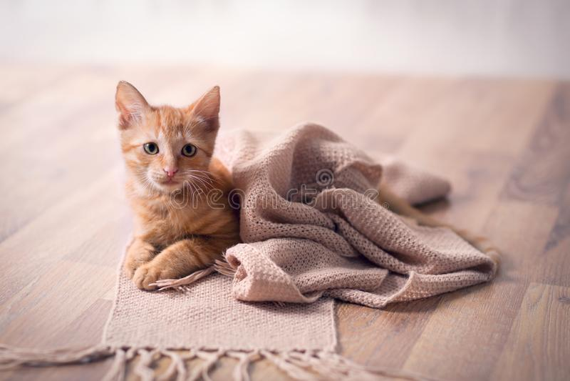 Jonge kat die op deken rusten stock afbeeldingen