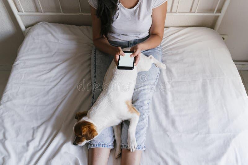 Jonge Kaukasische vrouw op bed die mobiele telefoon met behulp van Leuke kleine hond die bovendien liggen Liefde voor dieren en t stock foto's