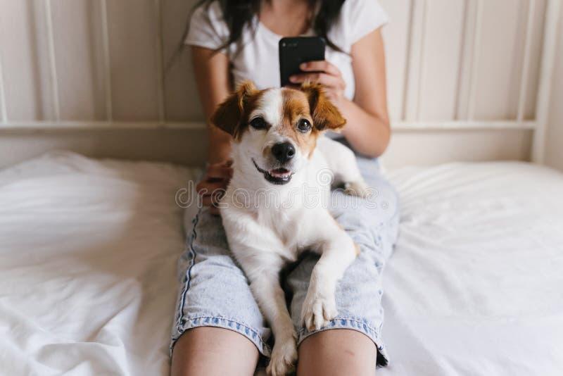 Jonge Kaukasische vrouw op bed die mobiele telefoon met behulp van Leuke kleine hond die bovendien liggen Liefde voor dieren en t stock fotografie