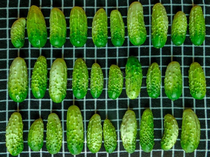 Jonge kleine komkommers stock fotografie