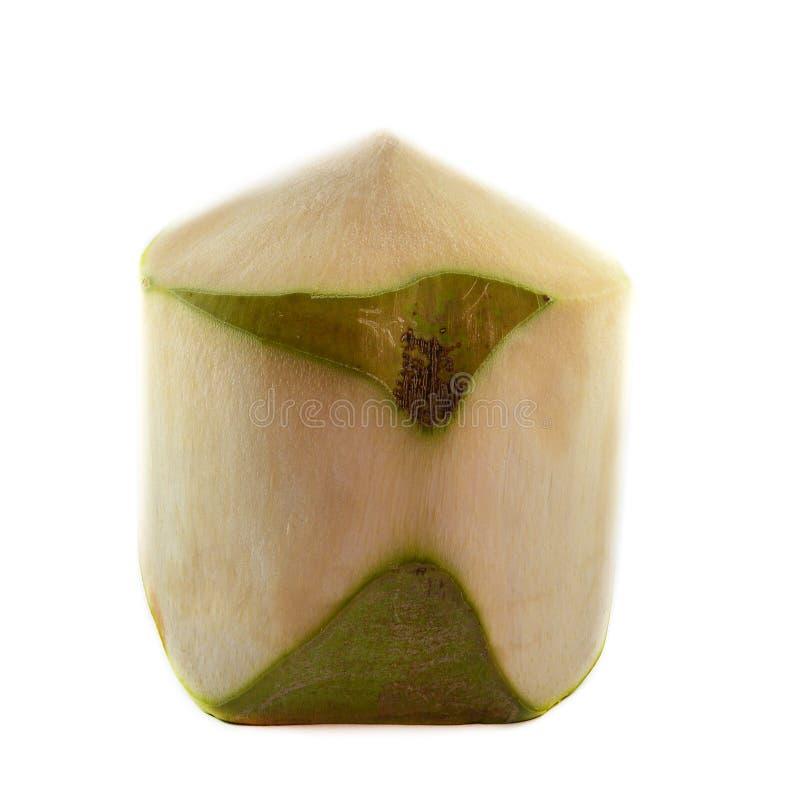 Jonge kokosnoot royalty-vrije stock afbeeldingen