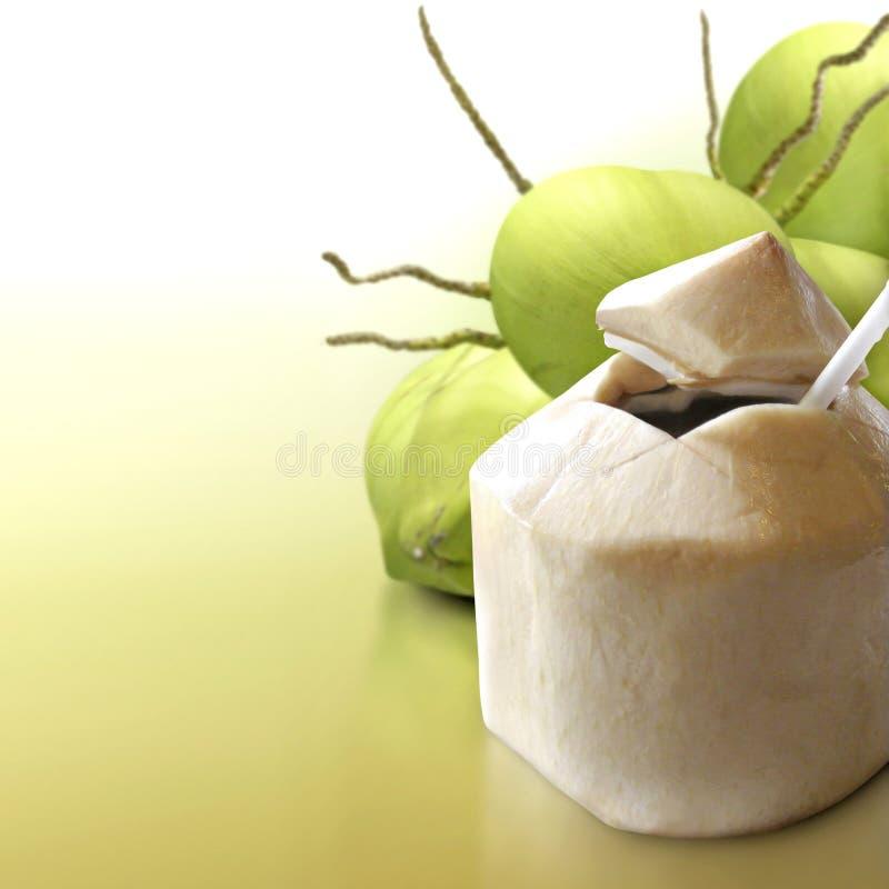 Jonge kokosnoot op vast lichaam stock afbeelding