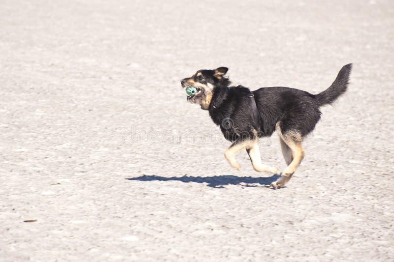 Jonge kruisingshond stock afbeelding