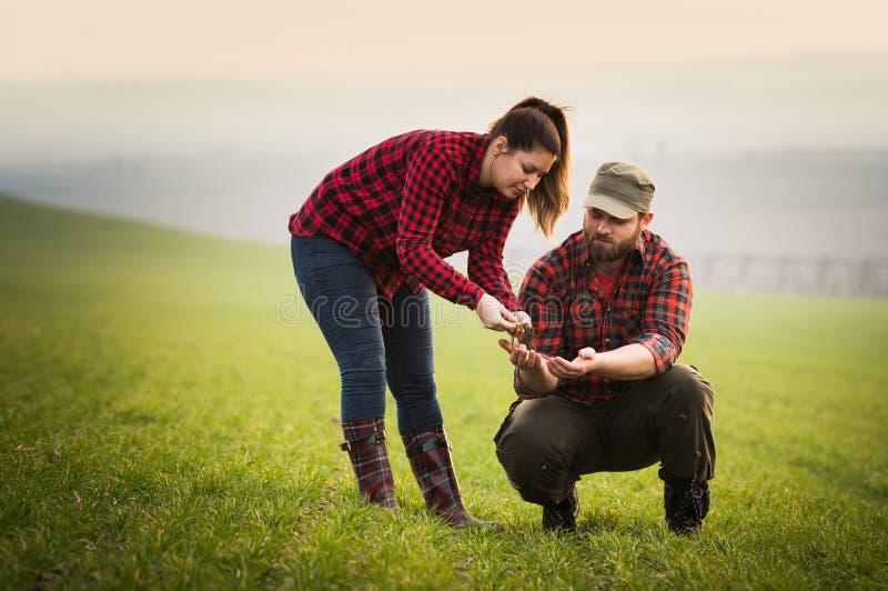 Jonge landbouwers die geplante jonge tarwe examing tijdens wintertijd stock fotografie