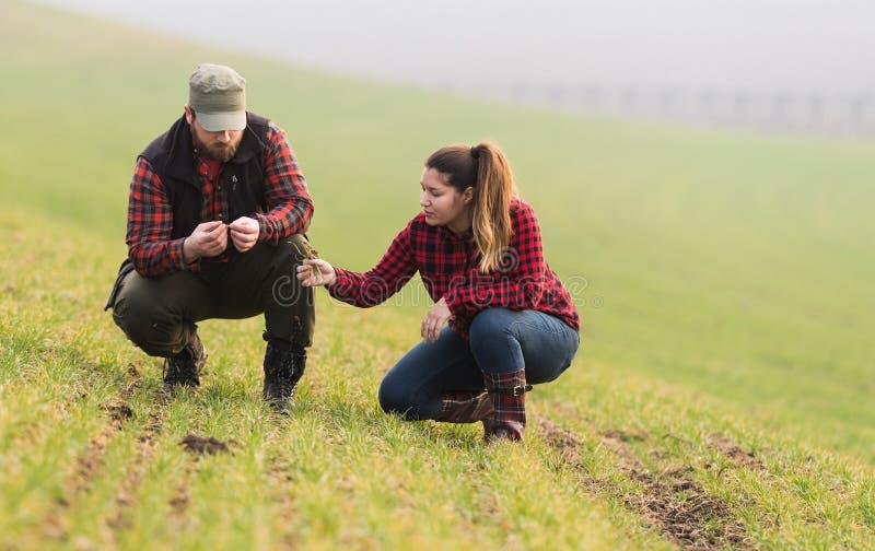 Jonge landbouwers die geplante jonge tarwe examing tijdens wintertijd royalty-vrije stock foto