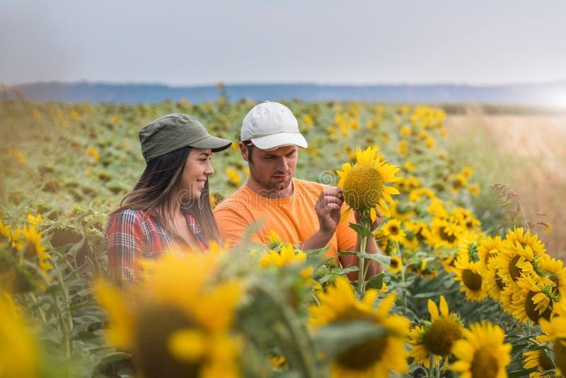 Jonge landbouwers die gewas van zonnebloemen op gebieden onderzoeken tijdens samenvatting royalty-vrije stock afbeeldingen