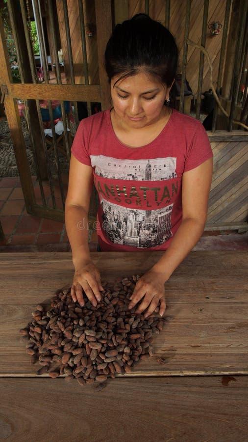Jonge Latijnse vrouw die cacaobonen selecteren Het scheiden van cacaobonen is een deel van t royalty-vrije stock fotografie