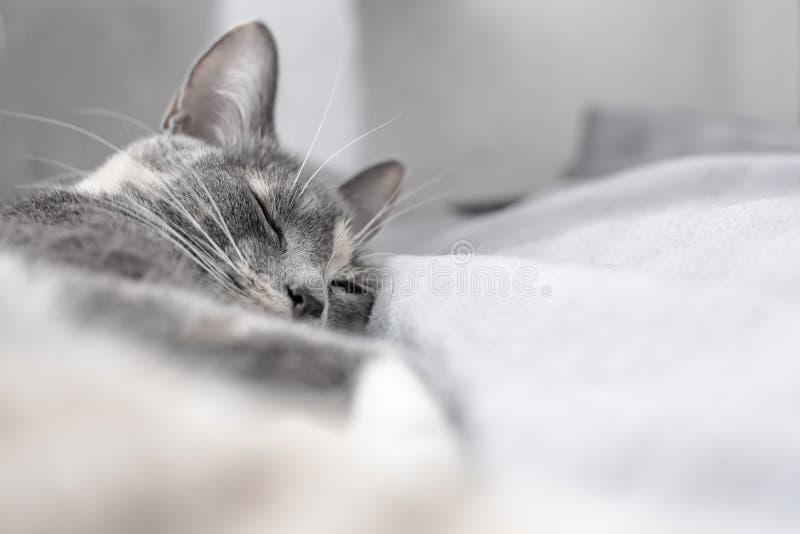 Jonge, leuke kattenslaap op een zachte, warme plaid stock afbeelding