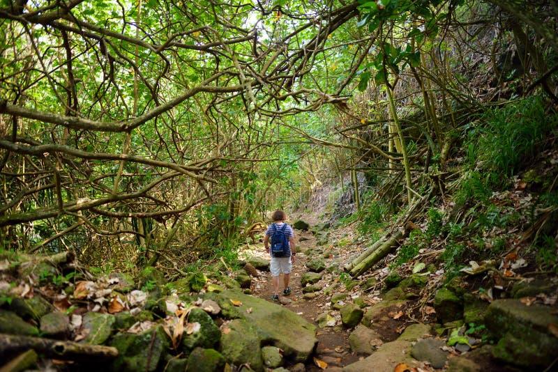 Jonge mannelijke toerist die op mooie die Pololu-lijnsleep wandelen dichtbij Kapaau, Hawaï wordt gevestigd stock fotografie