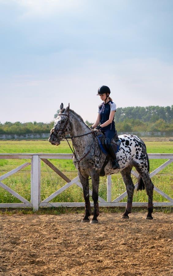 Jonge meisjesjockey op een paard in openlucht De vrouwelijke atleet berijdt een paard op open manege stock foto