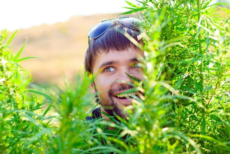 Jonge mens in de struik van cannabis royalty-vrije stock afbeeldingen