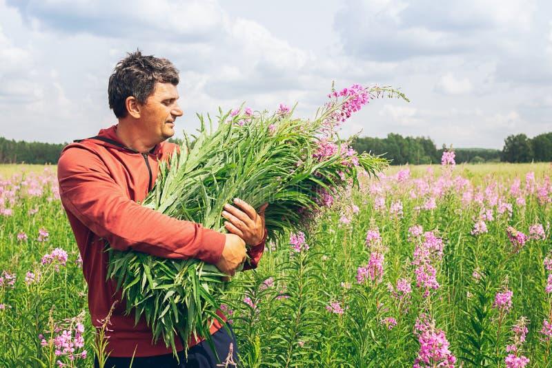 Jonge mens die een armvol de thee van Iwan van het wildflowerswilgeroosje houden tegen een bloeiende weide toning Selectieve nadr royalty-vrije stock foto