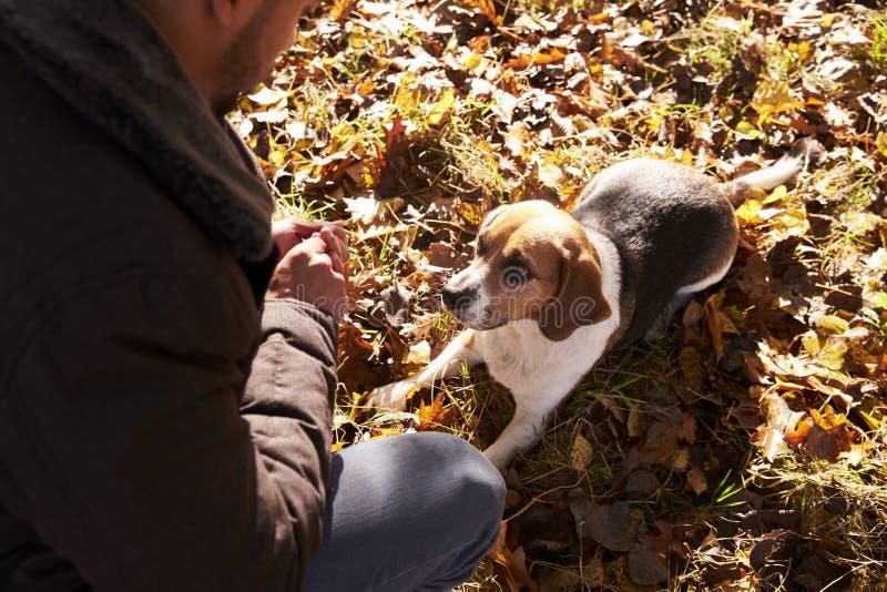 Jonge Mens die Hond in Autumn Woodland uitoefenen royalty-vrije stock foto's