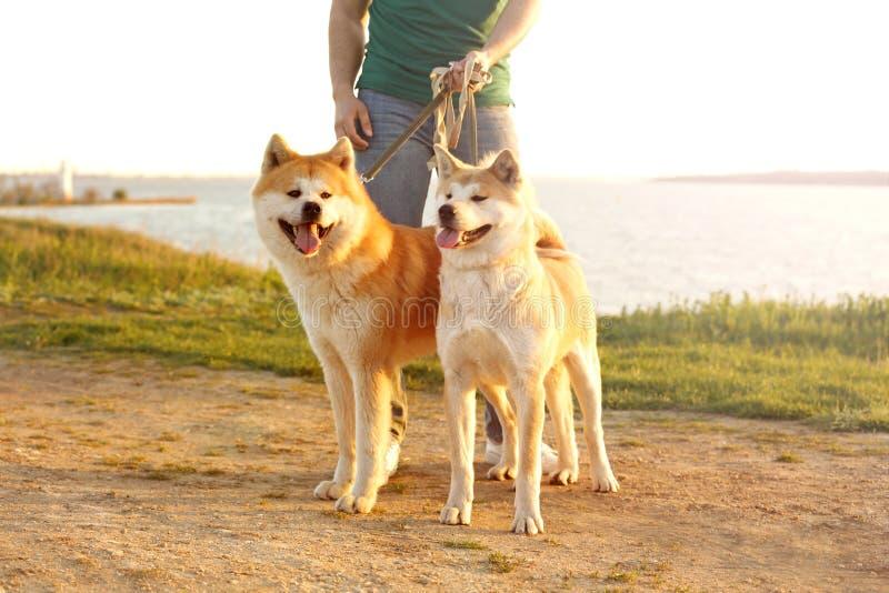 Jonge mens die zijn aanbiddelijke Akita Inu-honden lopen royalty-vrije stock foto