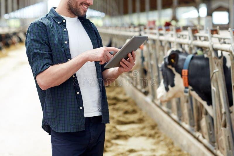 Jonge mens met tabletpc en koeien op melkveehouderij royalty-vrije stock afbeeldingen