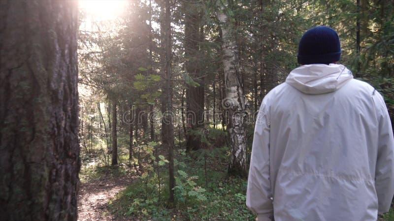 Jonge mens op het kamperen reis Concept vrijheid en aard Weergeven van de mens van het achter lopen in hout langs weg op zonnig royalty-vrije stock fotografie