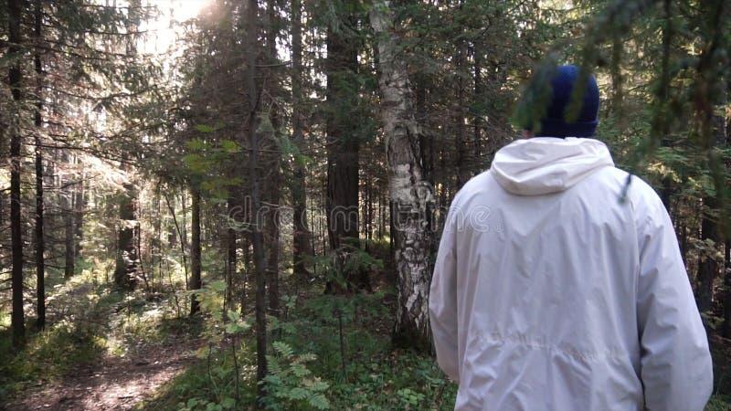 Jonge mens op het kamperen reis Concept vrijheid en aard Weergeven van de mens van het achter lopen in hout langs weg op zonnig stock afbeeldingen
