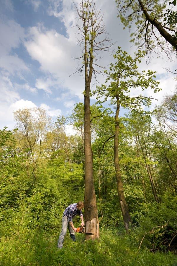 Jonge mensen scherpe boom stock foto