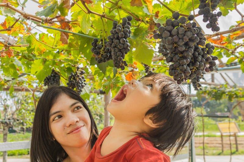 Jonge moedervrouw met zoon in druivenwijngaard royalty-vrije stock fotografie