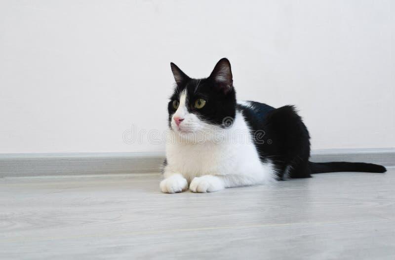 Jonge mooie leuke kat die op de vloer in een heldere ruimte liggen Merkwaardig kijkend aan de linkerkant die van het kader, op ie royalty-vrije stock foto