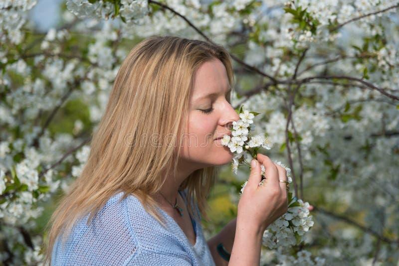 Jonge mooie vrouwen ruikende bloeiende bloemen van pruimboom stock foto